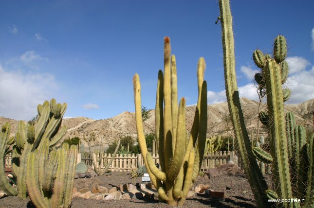 Cactussen in 'Hollywood'